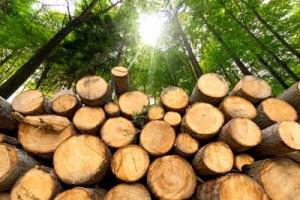 Forest-Management